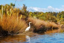 white heron in lagoon by bushes