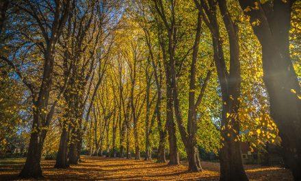 Autumn Colours In Central Otago