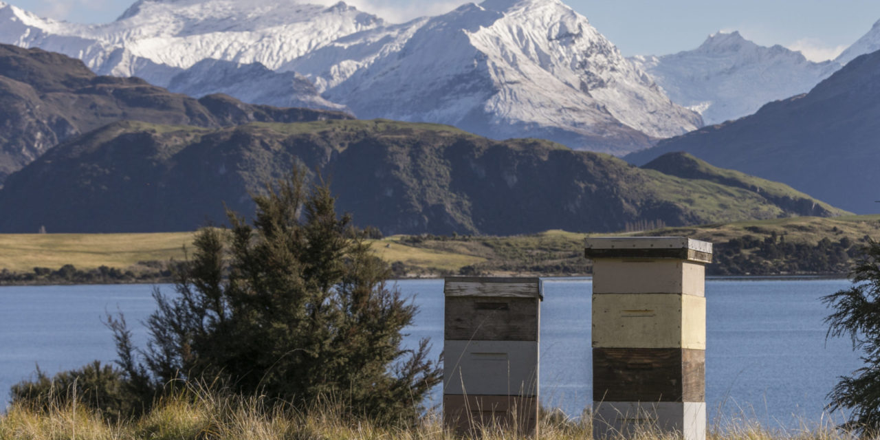 South Island Honey In Demand